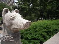 rittenhouse dog