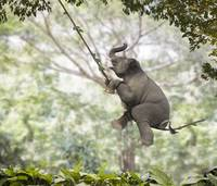 Elephant Swinger