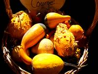 Multicolored, Multishaped Warty Gourds, Still Life