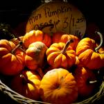 """Small Pumpkins,Wicker Basket,Fall Scene,Still Life"" by Chantal"