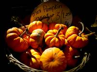 Small Pumpkins,Wicker Basket,Fall Scene,Still Life