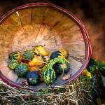 """Fall Autumn Harvest,Gourds & Squash,Still Life Art"" by Chantal"