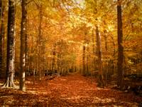 Fall Autumn Colors,Leaf Covered Path,Magical Woods