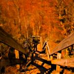 """Old Wooden Forest Stairs,Orange Fall Autumn Scene"" by Chantal"