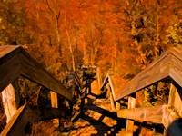 Old Wooden Forest Stairs,Orange Fall Autumn Scene