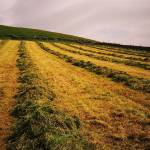 """Pasture Lines"" by PaulSharpPhotography"