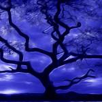 """Live Oak Night (Blue)"" by WardArt"