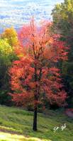 Fall Tree on the Mountain 7698