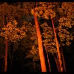 """Trees"" by Katiesfinearts"