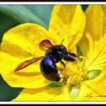"""""""PLEASE BEE MINE"""" by JCJones"""