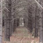 """""""Doorway in the Woods"""" by KimberImages"""