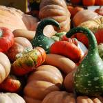 """Gracious Gourds"" by jaime_rose_photography"