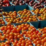 """Tomatos"" by jaime_rose_photography"