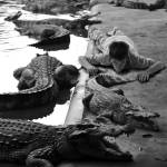 """Sunning with the Crocodiles"" by carlnelson"