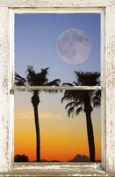 Full Moon Palm Trees Sunset  Window View
