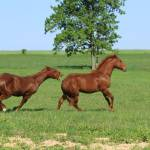 """""""IMG_9311colts 50511"""" by julieabrown"""