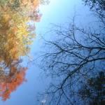 """""""Reflections II"""" by stilljustabill"""