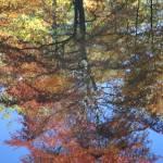 """""""Reflections IV"""" by stilljustabill"""