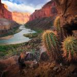 """Marble Canyon Cactus"" by Inge-Johnsson"