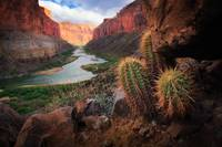 Marble Canyon Cactus