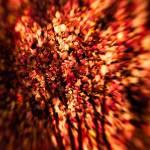 """Shadows on the Leaves"" by singularscenes"