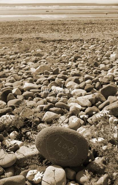 Stunning beach sepia photography for sale on fine art prints for Photography pictures for sale