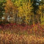 """""""Bands of Red and Gold"""" by Trailheads"""