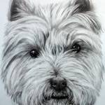 """West Highland Terrier"" by donnabonavia"