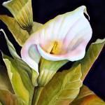 """Calla Lily"" by donnabonavia"