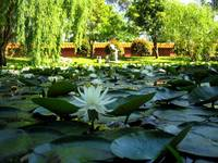 Nan Tien Temple pond