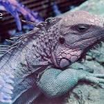 """""""iguana-cutie"""" by TheLioness"""