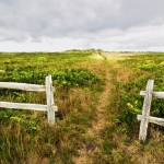 """Nantucket path to the beach"" by HollyLadd"