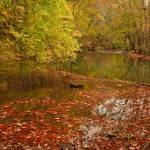 """Fall Reflections"" by julieandel"