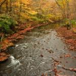 """""""Peaceful Fall"""" by julieandel"""