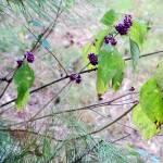 """""""Berries"""" by jdharrison"""
