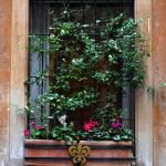 """""""Window Plants"""" by raetucker"""