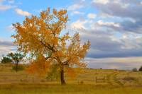 Country Autumn Landscape