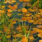 """""""spring pond"""" by jebrunner58"""
