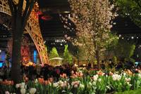 flower show: 'springtime in paris'