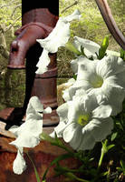 White Petunia and Rusted Fountain