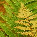 """fall ferns 8 x 10"" by naturally"