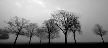Foggy Trees in Black and White