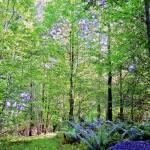 """""""Scottish Woods"""" by DaveScott"""