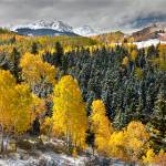 """Aspen Grove In Late Autumn"" by pbk"