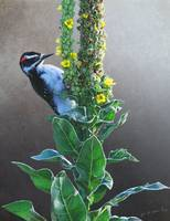 mullein seed bank / hairy woodpecker