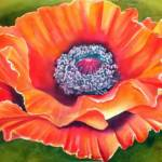"""poppy flower"" by donnabonavia"
