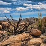 """Desert Southwest Landscape with Dead Tree"" by johncorney"