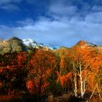 """Rocky mountain Fall (116)"" by CanyonlandsPhotography"