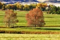 Autumn Landscape Dream