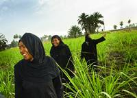 Egyptian women coming out of the reeds, Luxor